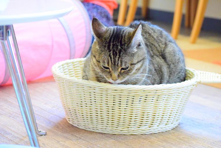 猫まるカフェ(上野)