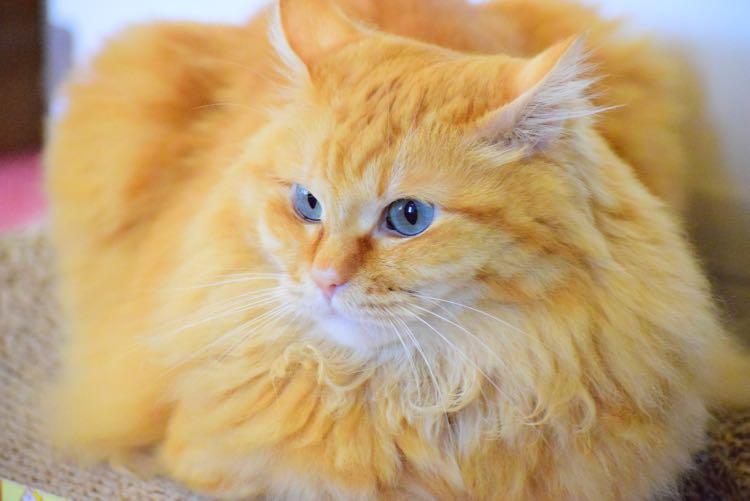 可愛い猫とウニャウニャしながら!猫カフェでフレイム・ファッション診断を計画中です。