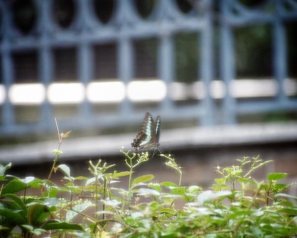 蝶々の撮影はむずかしいけど、シャッタースピードや構図を勉強できました。