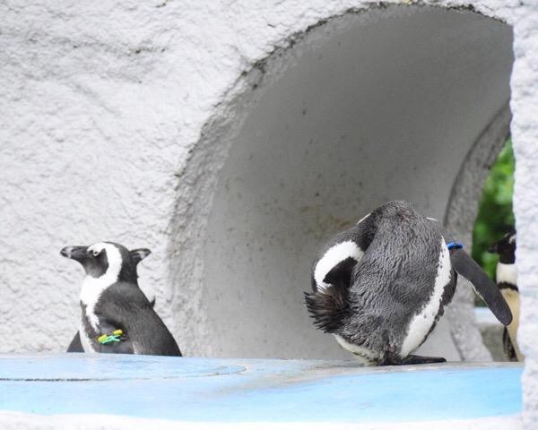 カメラ練習、今日はペンギン。