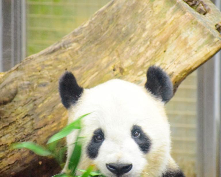 上野動物園でのパンダ撮影で気をつけていることは、「頑張らない」こと。