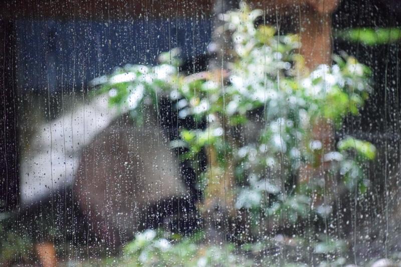 寝起きのリーリー[2017/10/15]