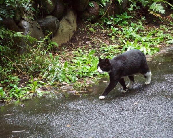 猫に近づくコツは、猫がこちらを見ていないとき。動物写真、練習中。