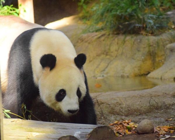 今日もカメラをつれて、上野動物園へ。