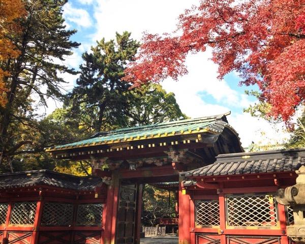 谷根千散歩 根津神社の紅葉