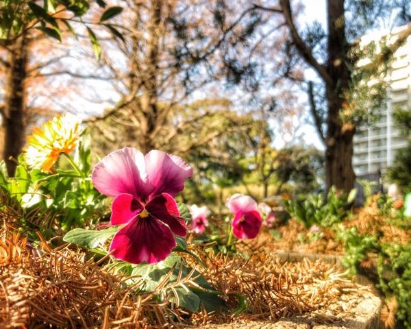 今日は野外で、花が可愛く見えるアングルを探しました!【iPhone・本気・写真術 自主練2日目】