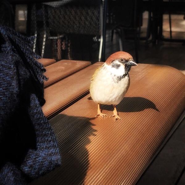 不忍池テラスで野鳥に会う。上野動物園西園の休憩スポットでランチとカフェオレ、野鳥を楽しみました。[iPhone・本気・写真術 自主練4日目]20/100 blogs