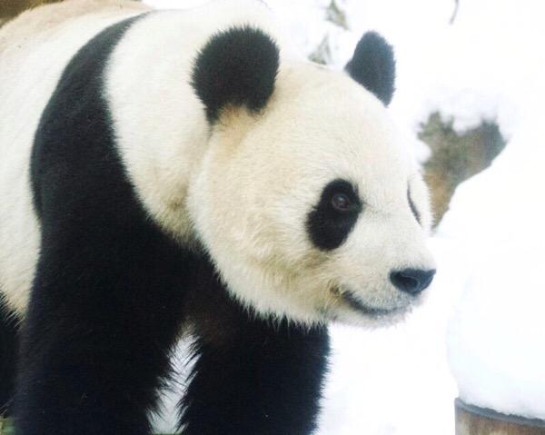 雪の日の上野動物園リーリー
