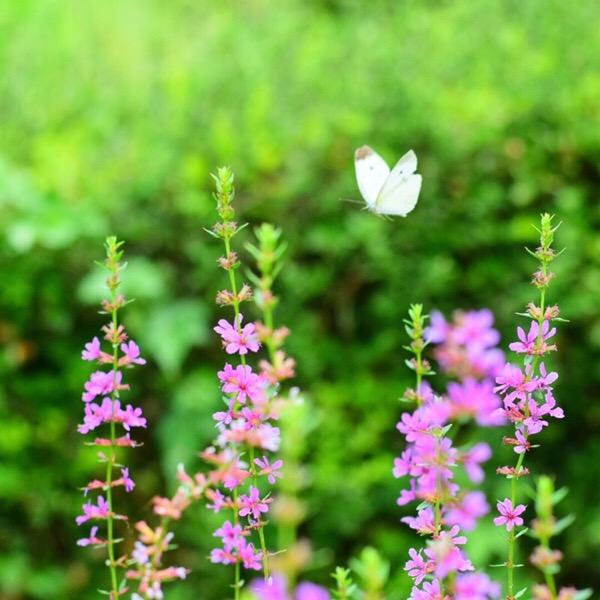 小石川植物園で、自然観察をしながら撮影練習の一日。