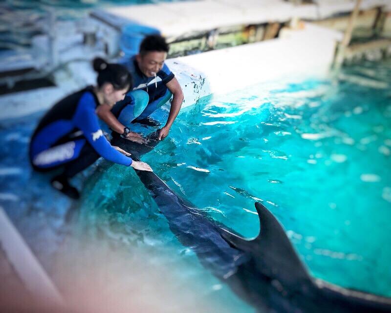 鴨川シーワールドでワンダフルドルフィン!イルカと一緒に泳ぐ、胸が高鳴る体験でした!