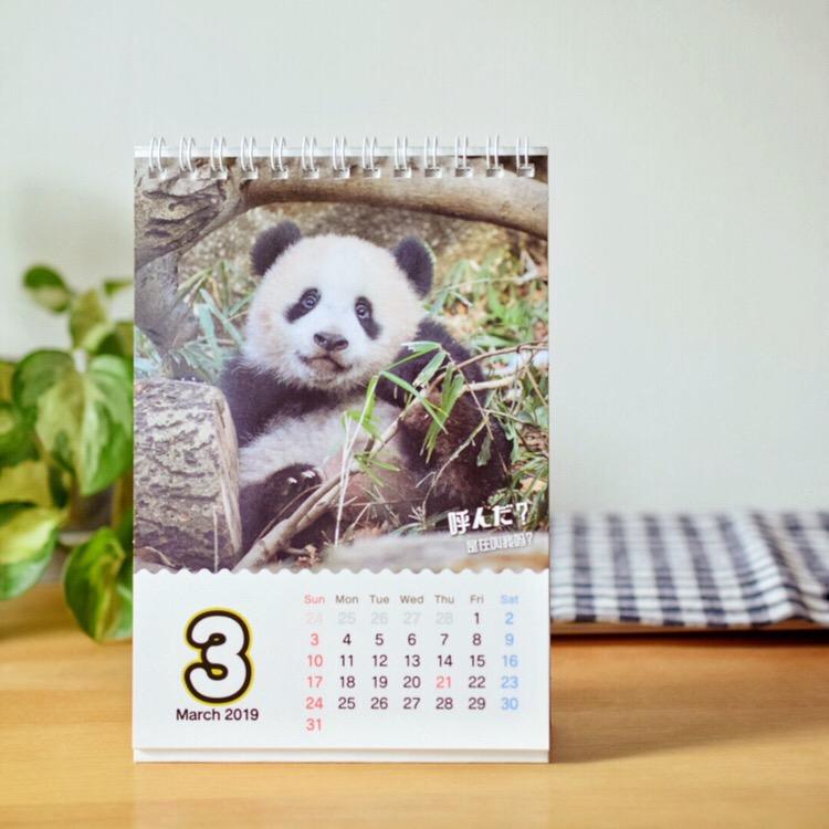 シャンシャン2019年カレンダー(ほんわか中国語フレーズ付き)  発売中。上野動物園シャンシャンの写真を提供しました。