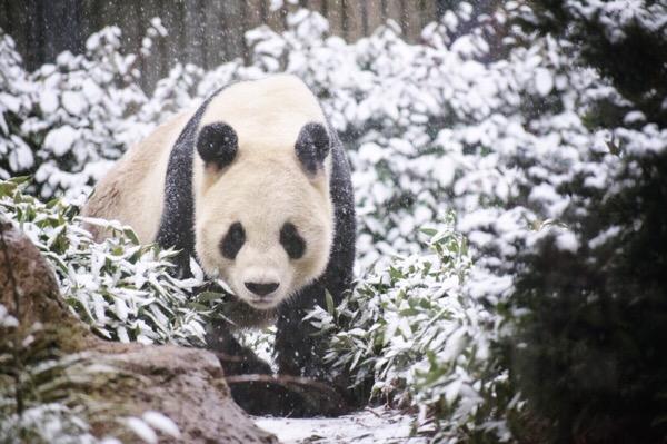 雪の中のリーリー