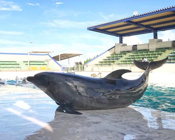 心からの願いは、泳げないままでも叶うんだ。8/100blogs
