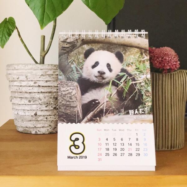 シャンシャンほんわか中国語付きカレンダー、3月は私の撮影した写真をお楽しみいただいています。10/100blogs