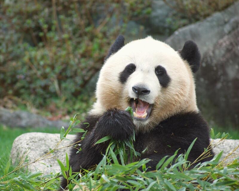 「色」のフィルターで、可愛いふわふわパンダに仕上げよう。【パンスタグラム講座】14/100blogs