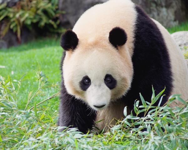 パンダ撮影に使ってるカメラ&レンズはこれ!【パンスタグラム講座】26/100blogs