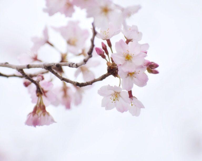 具体的な行動目標ができて、この春は楽しくなりそう!3/100blogs