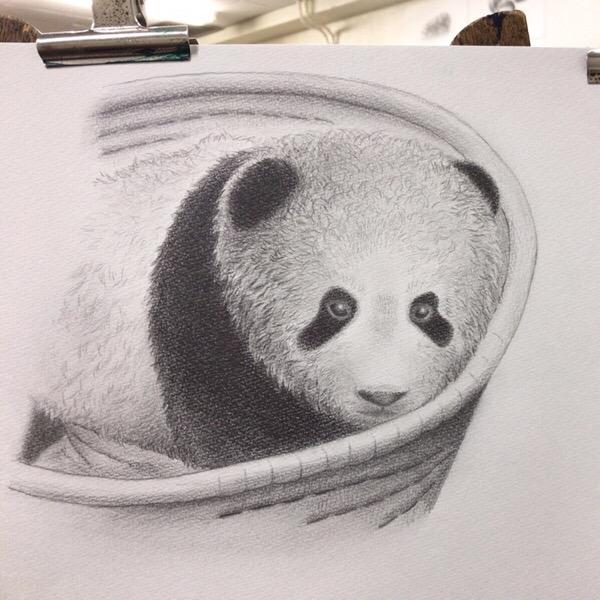 シャンシャンの写真を模写。毛並みを描き込む練習を。【まいにち色鉛筆 10/Apr/2019】15/100blogs
