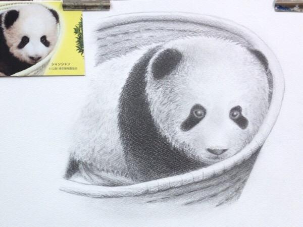 動物イラスト、パンダの子。【まいにち色鉛筆18/Apr/2019】21/100blogs