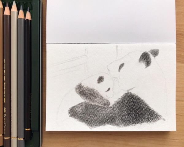 色鉛筆で動物イラスト。母子のふれ合いは、いちばん描きたいテーマ。【まいにち色鉛筆21/Apr/2019】25/100blogs