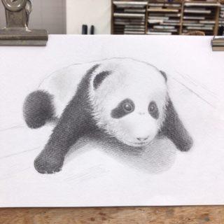 生き物としての立体感を出すコツ。結浜をモデルに赤ちゃんパンダを描く!【鉛筆デッサン】27/100blogs