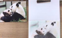 パンダ母子の授乳シーンを色鉛筆で描く。【まいにち色鉛筆 3/May/2019】2/100blogs